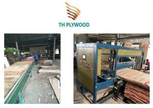 plywood conveyer line